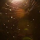 Caught in the Web by Through-The-Eye