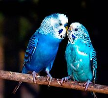 Bird Love by John Walsh, IRELAND