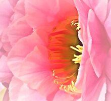 Desert Flower by tvlgoddess