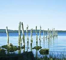 Wilson Inlet Poles  by pennyswork