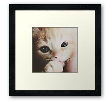 Cuteness Overload - Kitten Edition Framed Print