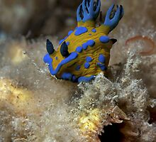 Play-doh Slug. by James Peake Nature Photography.