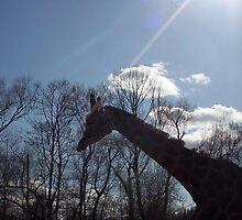Giraffe silhouette by philld14