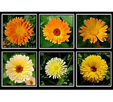 Marigold Collage Photographic Print