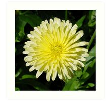 Pale Yellow Mary Bud Marigold With Garden Background Art Print