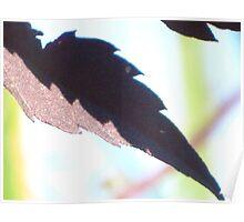 Jagged Leaf Rainbow Poster