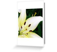 Asiatic Lily Greeting Card