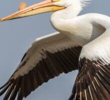 White Pelican 5-2015 Sticker