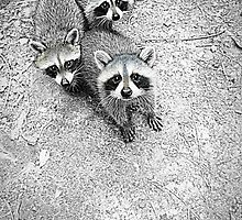 Which One Is The Cutest? by Jean Gregory  Evans