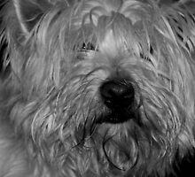 My dog crumb-2 by trainmaniac