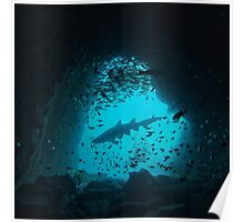 Grey Nurse Shark in Fish Rock Cave Poster