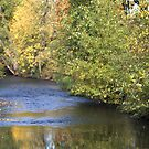 Fall Stream by Kimberly Adams