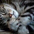 CatNap by Adrienne Berner