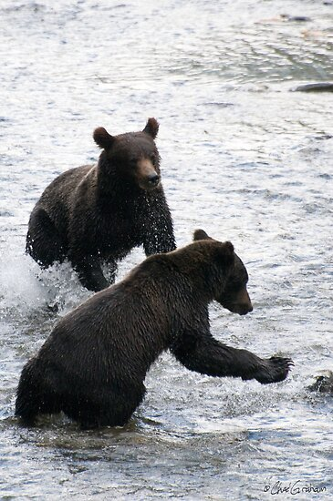 Grizzlies Fishing in Alaska by zpaperboyz