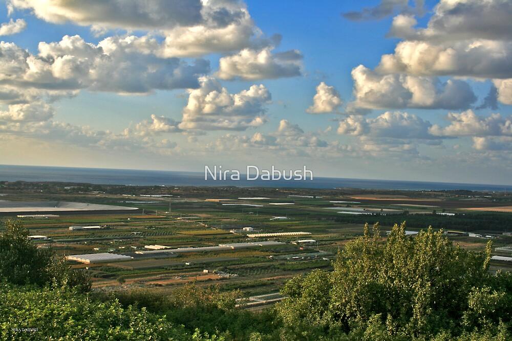 The Fields of Zikhron by Nira Dabush
