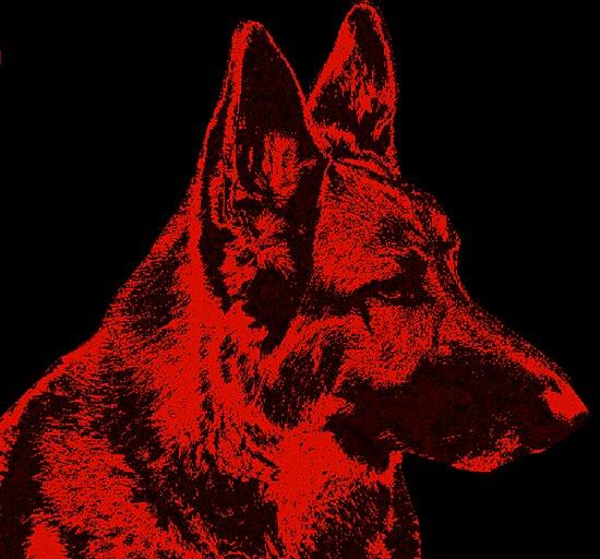 German Shepherd Dog in Red by Sandy Keeton