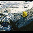 Honeycomb: Beautiful Debris at Revere Beach by Potassium