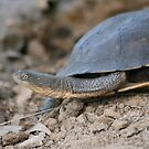 Dam tortoise by lulisa