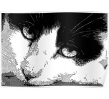 Pen and Ink Resting Cat Poster