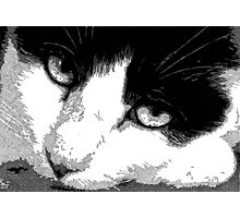 Pen and Ink Resting Cat Photographic Print