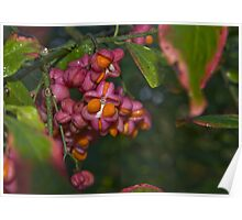 Dew on wild berries Poster