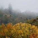 Fall On A Foggy Morning by Jessica Hardin