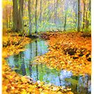 Woodland stream by signore