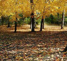 Golden Maples by Adam Bykowski