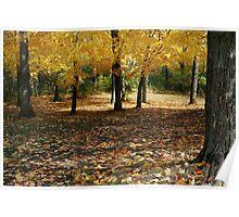 Golden Maples Poster