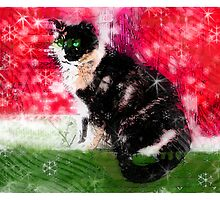 Christmas kitty by signore