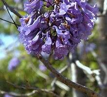spring is beautiful by edenapper