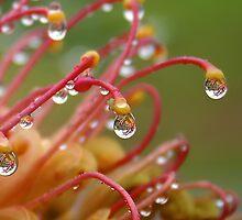 Drops by Paul Earl