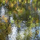 Autumn Reflections by Tama Blough