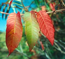 Three Leaves by Rachel Broten