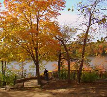 Changing Colors of The Leaves by Wanda Raines