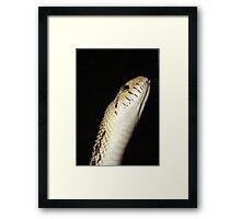 Snake!!! Framed Print