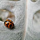 LADYBIRD. by the6tees
