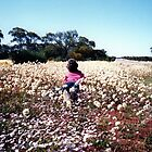 Paper Daisies as far as the eye can see by Lozzie5243