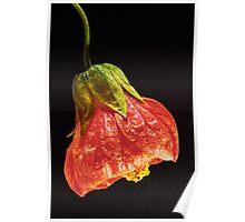 Chinese Lantern - Orange Poster