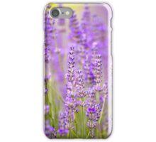 Lavender Farm iPhone Case/Skin