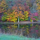 Fall Trees - Brown County State Park by Jennifer Ferry