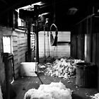Brickendon Shearing Shed by samedog