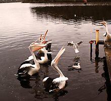 Singing pelicans by georgieboy98