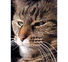 Momma Kitty Photographic Print