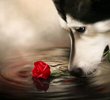Dog with Rose - Shelter Art by Renee Dawson