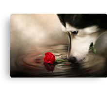 Dog with Rose - Shelter Art Canvas Print