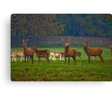 The Young Bucks  (Red Deer) Canvas Print