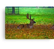 Fallow Stag Resting Canvas Print