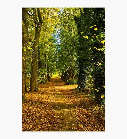 Autumn Path Photographic Print