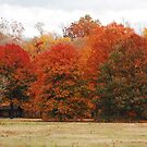 Fall in Ohio by mwfoster